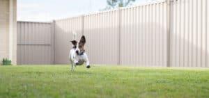 Dog Run Ideas Using Pervious Paving